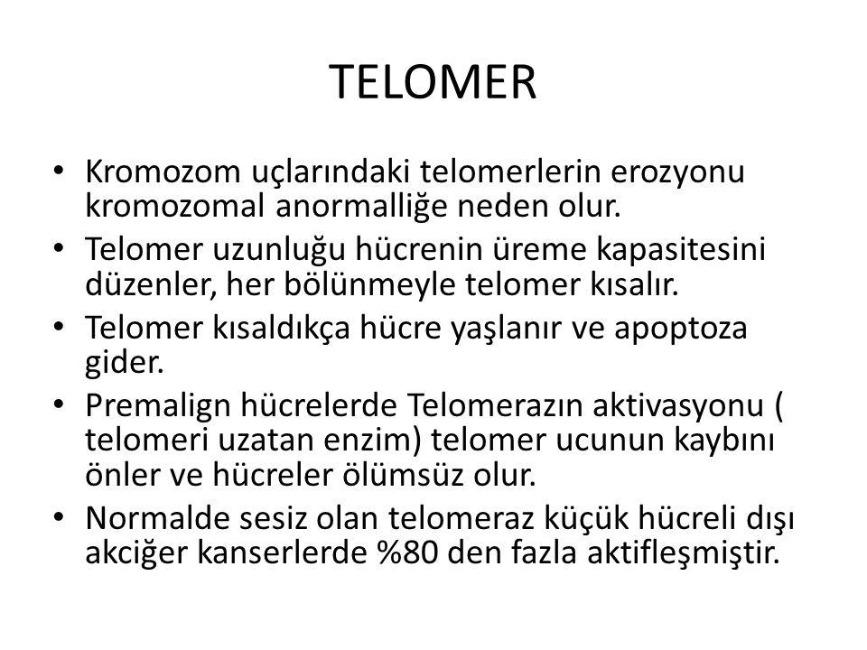 TELOMER Kromozom uçlarındaki telomerlerin erozyonu kromozomal anormalliğe neden olur. Telomer uzunluğu hücrenin üreme kapasitesini düzenler, her bölün