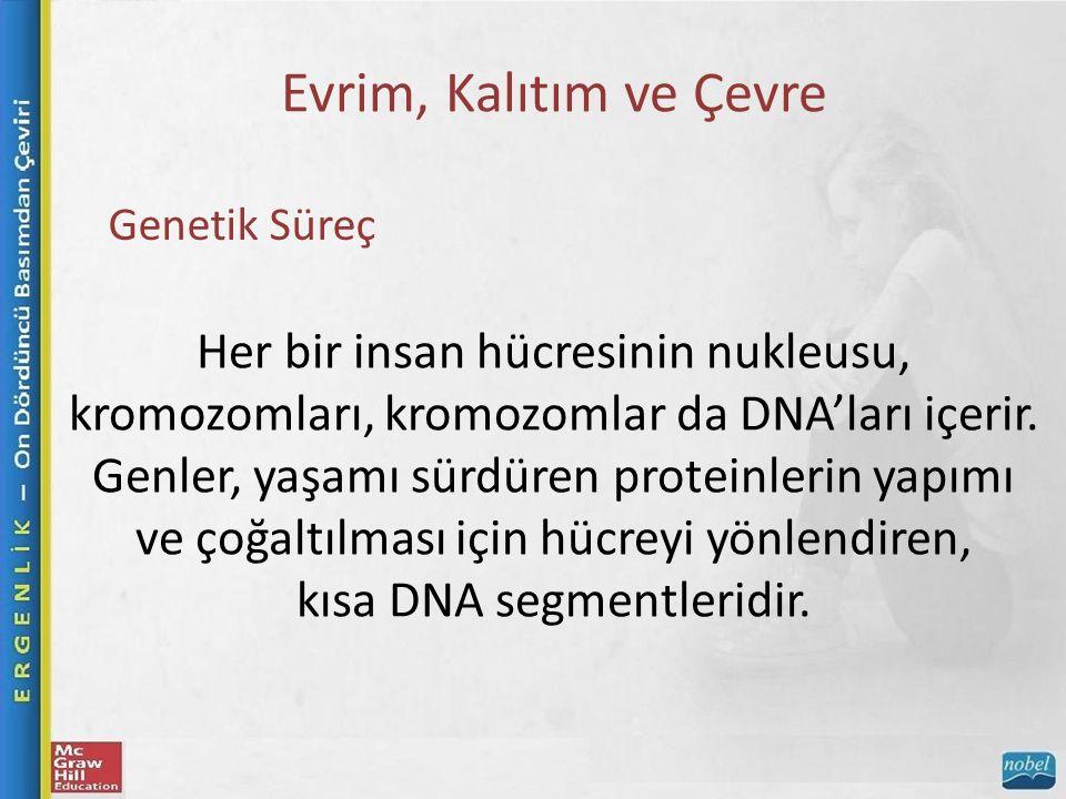 Evrim, Kalıtım ve Çevre Genetik Süreç Her bir insan hücresinin nukleusu, kromozomları, kromozomlar da DNA'ları içerir.