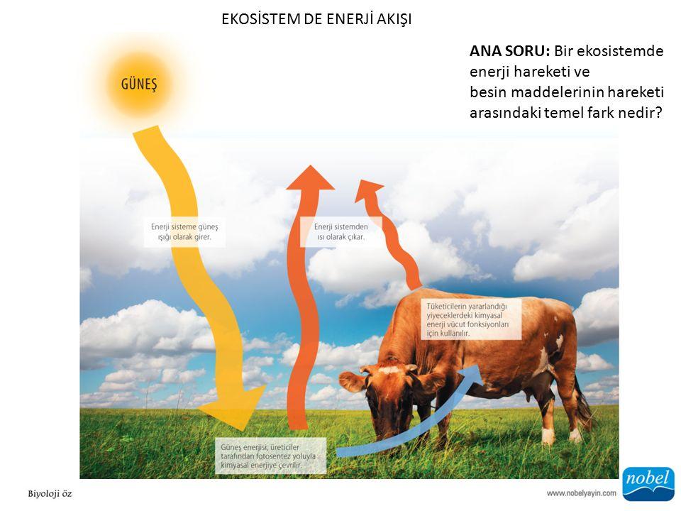 EKOSİSTEM DE ENERJİ AKIŞI ANA SORU: Bir ekosistemde enerji hareketi ve besin maddelerinin hareketi arasındaki temel fark nedir