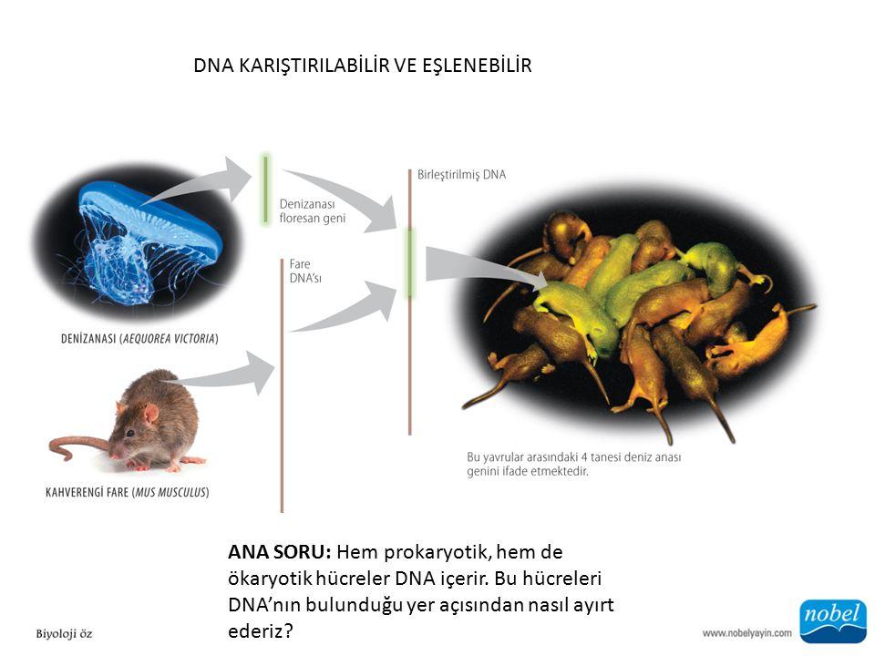 DNA KARIŞTIRILABİLİR VE EŞLENEBİLİR ANA SORU: Hem prokaryotik, hem de ökaryotik hücreler DNA içerir.