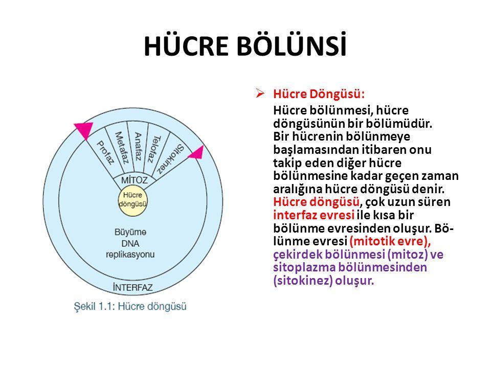 HÜCRE BÖLÜNSİ  Hücre Döngüsü: Hücre bölünmesi, hücre döngüsünün bir bölümüdür.