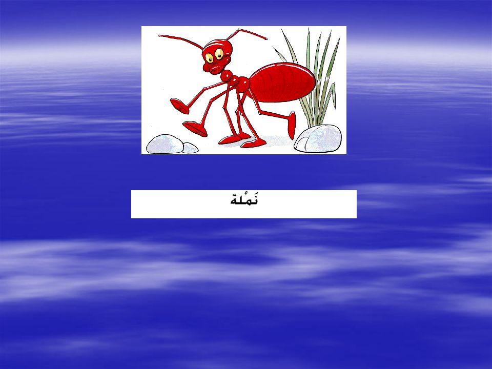 ARAPÇARESİMLİKELİMELER Hazırlayan : H.Hüseyin KÖKSAL (Arapça Öğretmeni)