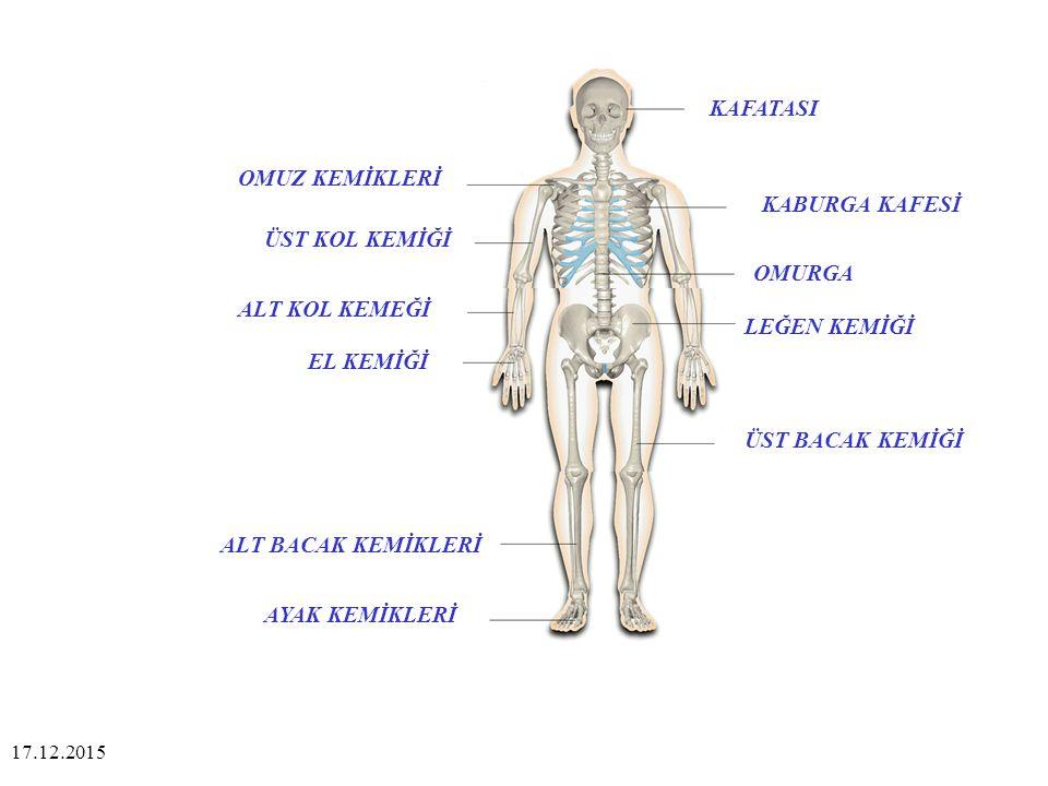 Çok az hareket edebilen eklemler, belkemiğinde olduğu gibi, kemiklerin kısıtlı hareketlerini sağlarlar.