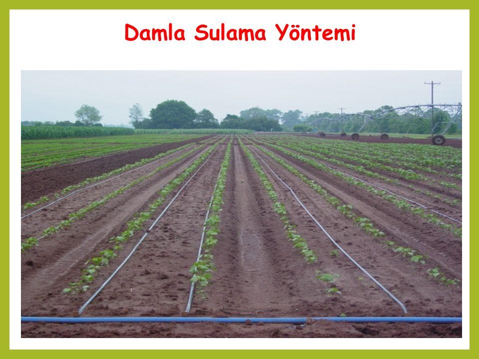 Bitki cinsiPSPS Tarla bitkileri ve sebzeler%80 Bağ ve sık dikim aralıklarına sahip meyve ağaçları (sıra aralığı 4 m'den sık) %75 Geniş dikim aralıklarına sahip meyve ağaçlarında(sıra aralığı 4 m ve daha geniş) %60 Proje sulama aralığı, SA  SA max olacak biçimde seçilir.