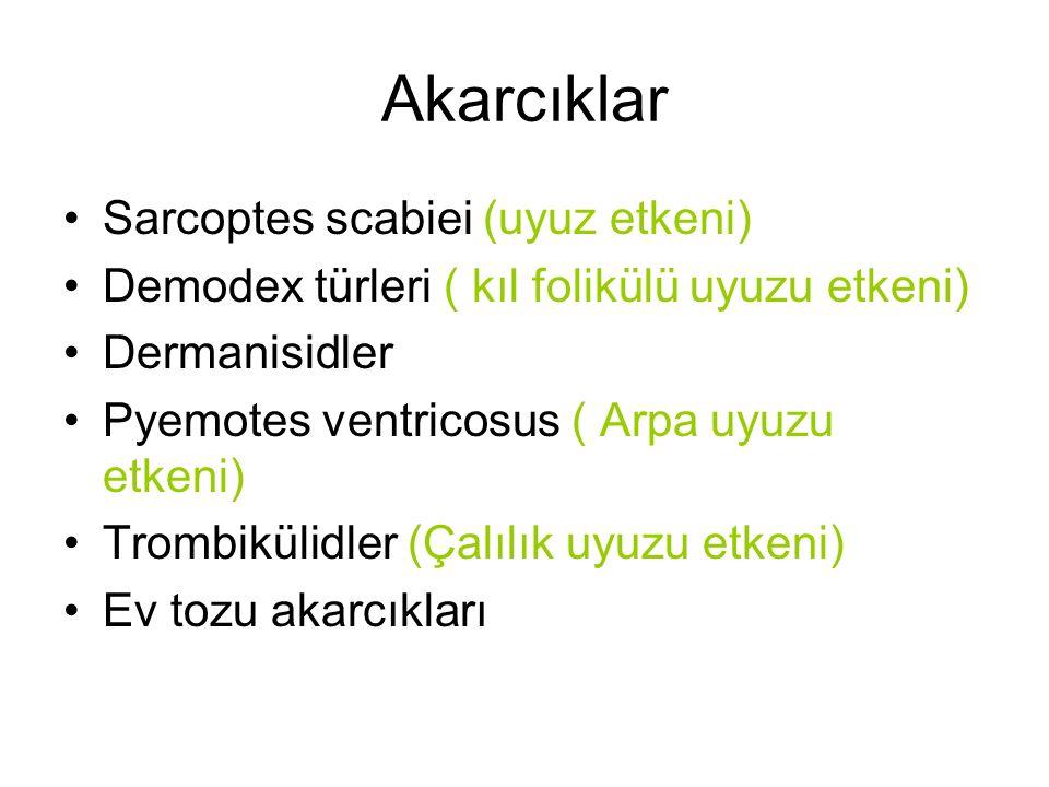 Akarcıklar Sarcoptes scabiei (uyuz etkeni) Demodex türleri ( kıl folikülü uyuzu etkeni) Dermanisidler Pyemotes ventricosus ( Arpa uyuzu etkeni) Trombi