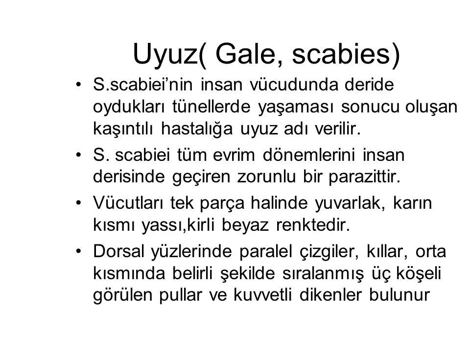 Uyuz( Gale, scabies) S.scabiei'nin insan vücudunda deride oydukları tünellerde yaşaması sonucu oluşan kaşıntılı hastalığa uyuz adı verilir. S. scabiei