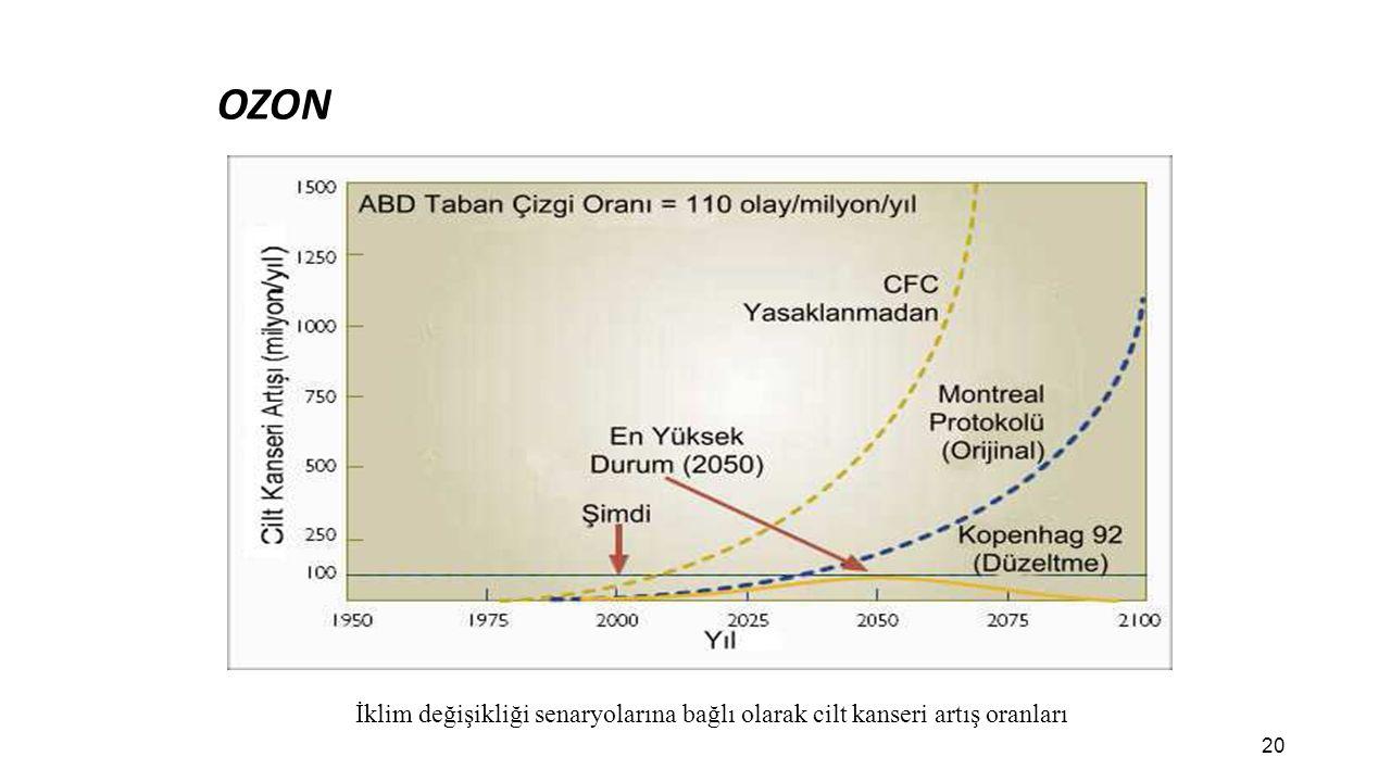 OZON İklim değişikliği senaryolarına bağlı olarak cilt kanseri artış oranları 20