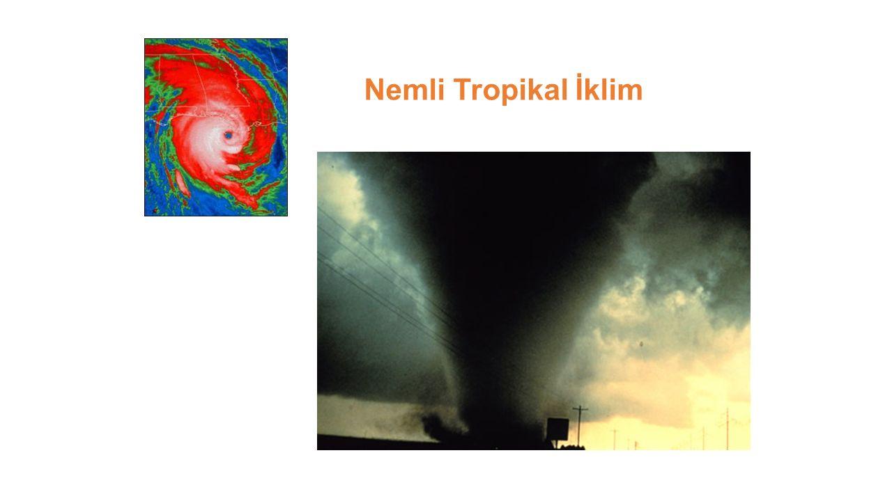 Nemli Tropikal İklim