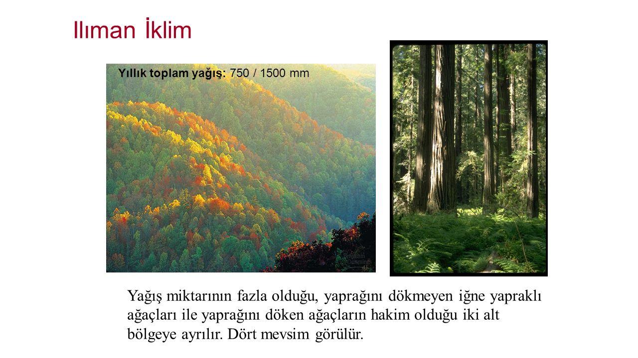 Ilıman İklim Yağış miktarının fazla olduğu, yaprağını dökmeyen iğne yapraklı ağaçları ile yaprağını döken ağaçların hakim olduğu iki alt bölgeye ayrıl