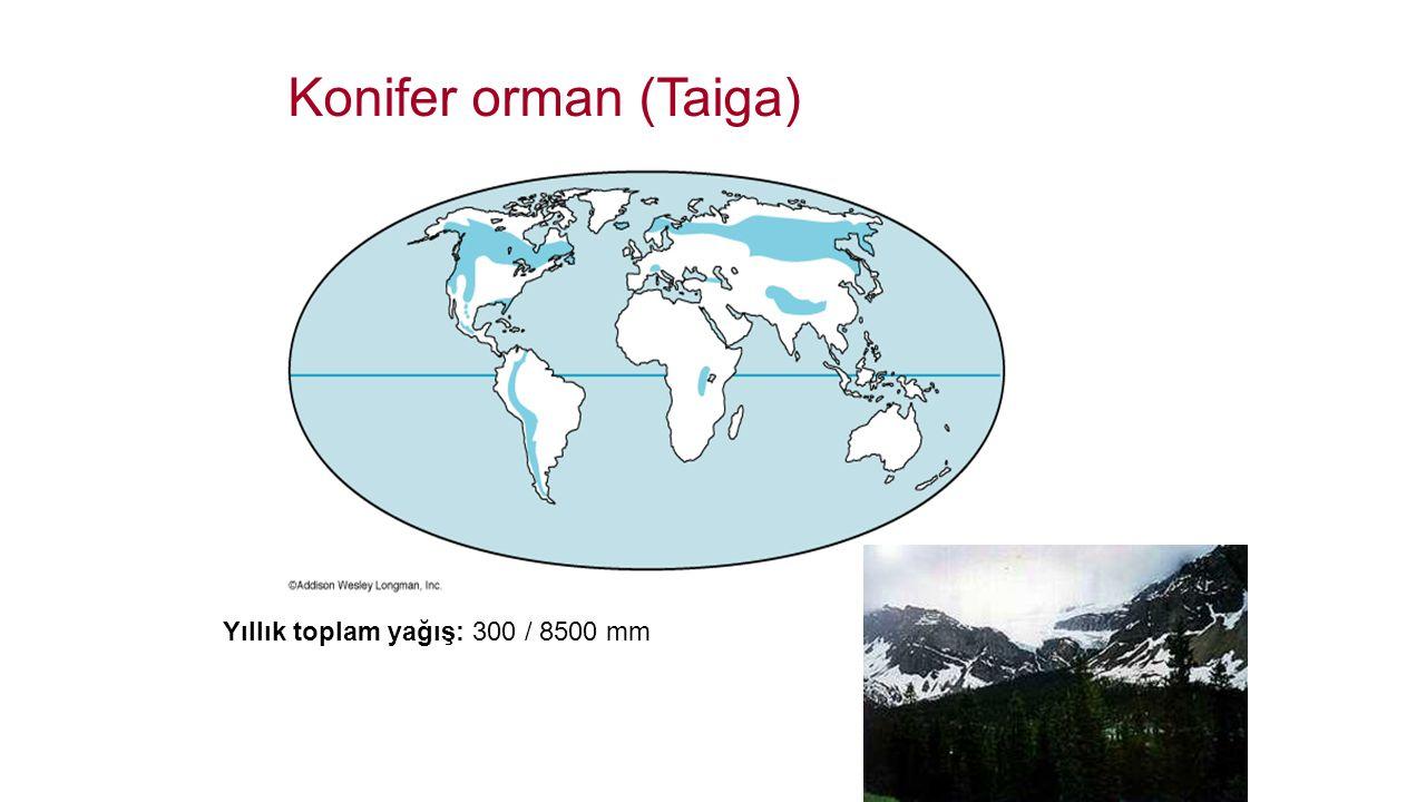 Konifer orman (Taiga) Yıllık toplam yağış: 300 / 8500 mm
