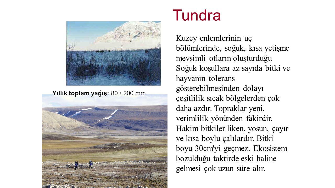 Tundra Kuzey enlemlerinin uç bölümlerinde, soğuk, kısa yetişme mevsimli otların oluşturduğu Soğuk koşullara az sayıda bitki ve hayvanın tolerans göste