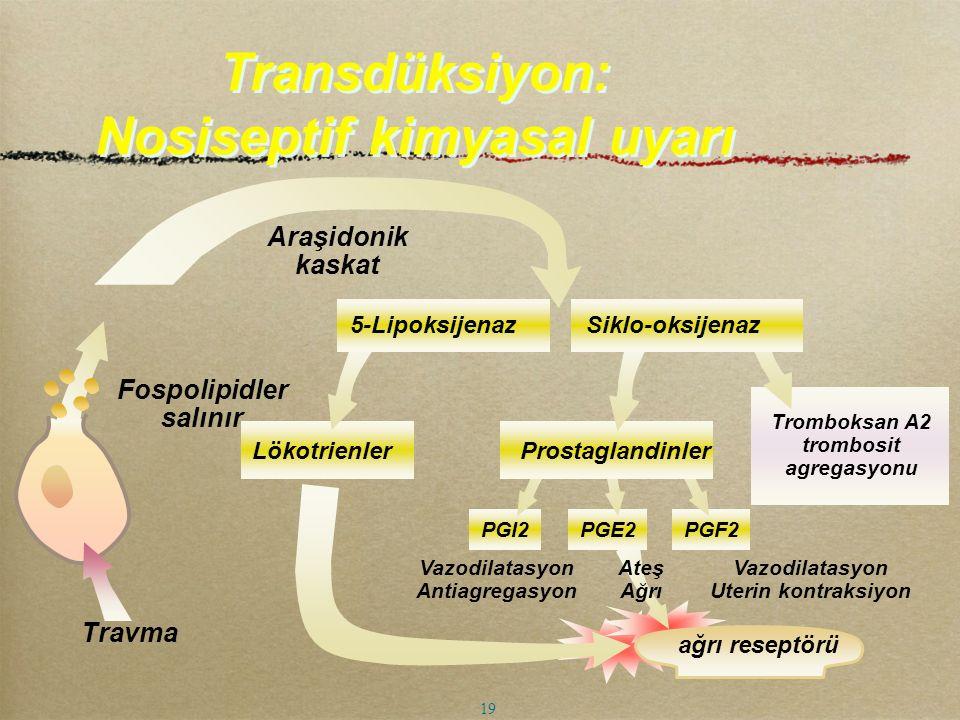 Lökotrienler Tromboksan A2 trombosit agregasyonu Vazodilatasyon Uterin kontraksiyon Ateş Ağrı PGI2PGE2PGF2 Prostaglandinler Vazodilatasyon Antiagregas