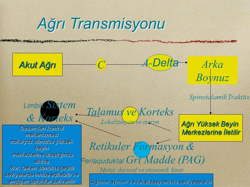 Ağrı Transmisyonu Arka Boynuz A- Delta C Ağrı Yüksek Beyin Merkezlerine İletilir Akut Ağrı Spinotalamik Traktüs Talamus ve Korteks Lokalizasyon ve ayı