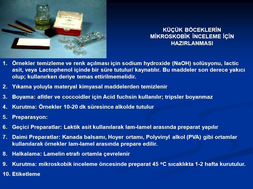 KÜÇÜK BÖCEKLERİN MİKROSKOBİK İNCELEME İÇİN HAZIRLANMASI 1.Örnekler temizleme ve renk açılması için sodium hydroxide (NaOH) solüsyonu, lactic asit, vey
