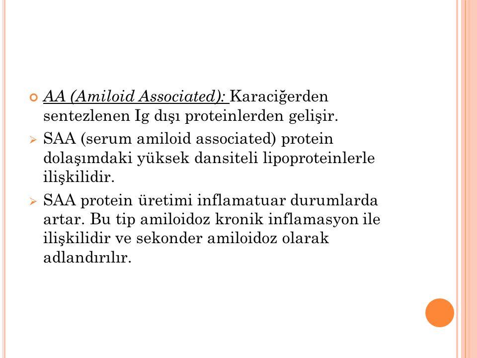 AA (Amiloid Associated): Karaciğerden sentezlenen Ig dışı proteinlerden gelişir.  SAA (serum amiloid associated) protein dolaşımdaki yüksek dansiteli