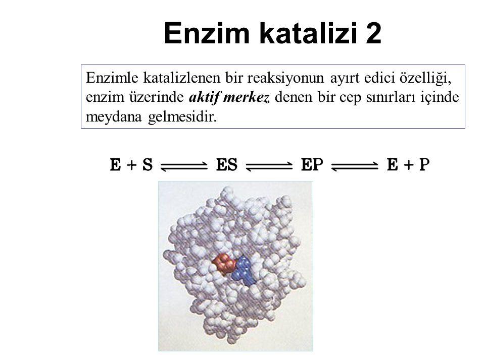 Enzim katalizi 2 Enzimle katalizlenen bir reaksiyonun ayırt edici özelliği, enzim üzerinde aktif merkez denen bir cep sınırları içinde meydana gelmesi