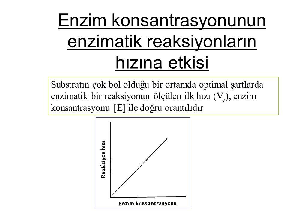 Enzim konsantrasyonunun enzimatik reaksiyonların hızına etkisi Substratın çok bol olduğu bir ortamda optimal şartlarda enzimatik bir reaksiyonun ölçül