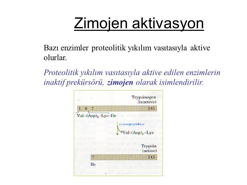 Zimojen aktivasyon Bazı enzimler proteolitik yıkılım vasıtasıyla aktive olurlar. Proteolitik yıkılım vasıtasıyla aktive edilen enzimlerin inaktif prek