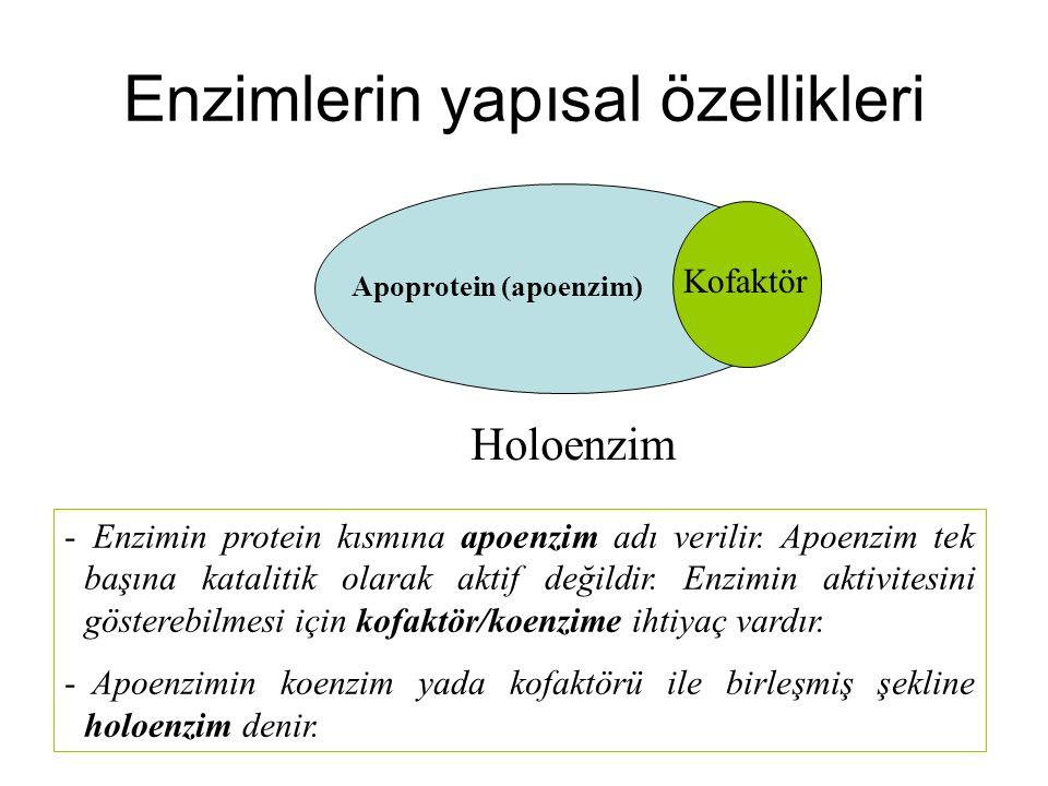 Enzimlerin yapısal özellikleri Kofaktör Apoprotein (apoenzim) Holoenzim - Enzimin protein kısmına apoenzim adı verilir. Apoenzim tek başına katalitik