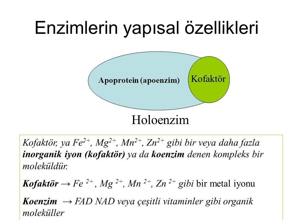Enzimlerin yapısal özellikleri Kofaktör Apoprotein (apoenzim) Holoenzim Kofaktör, ya Fe 2+, Mg 2+, Mn 2+, Zn 2+ gibi bir veya daha fazla inorganik iyo