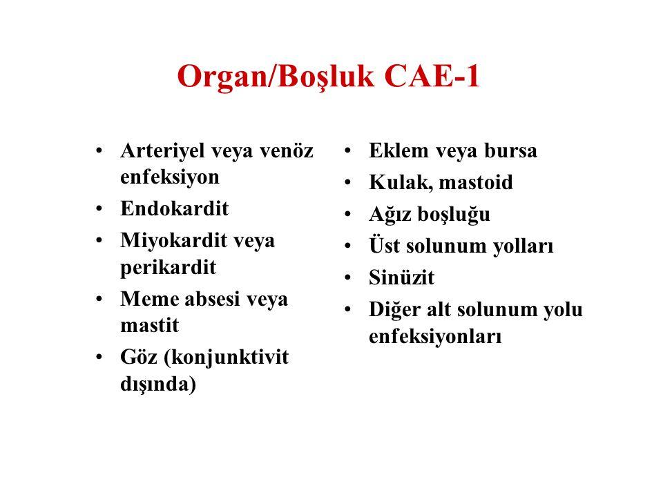 Organ/Boşluk CAE-2 Osteomiyelit Disk aralığı Menenjit veya ventrikülit Spinal abse İntrakraniyal, beyin absesi ve dura enfeksiyonu Gastrointestinal sistem İntraabdominal Endometrit Vajinal cuff Diğer genital sistem enfeksiyonları