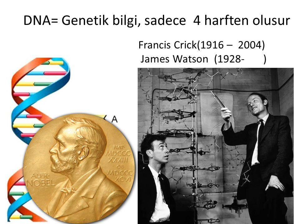 DNA= Genetik bilgi, sadece 4 harften olusur Francis Crick(1916 – 2004) James Watson (1928- )