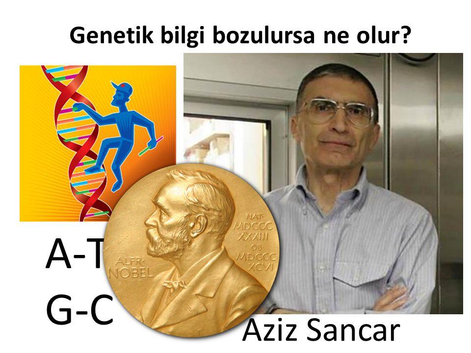 A-T G-C Genetik bilgi bozulursa ne olur? Aziz Sancar