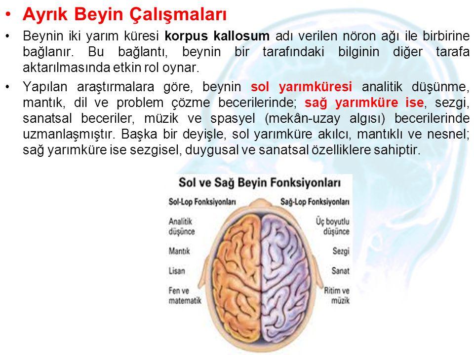 Ayrık Beyin Çalışmaları Beynin iki yarım küresi korpus kallosum adı verilen nöron ağı ile birbirine bağlanır. Bu bağlantı, beynin bir tarafındaki bilg