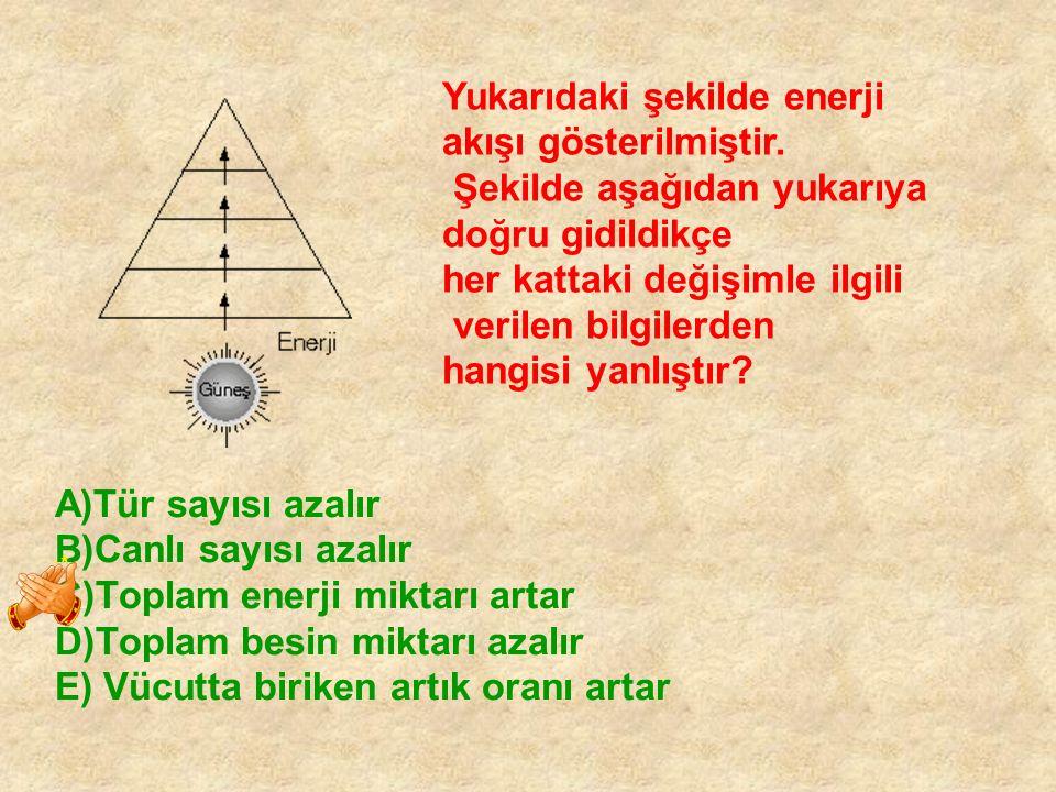 A)Tür sayısı azalır B)Canlı sayısı azalır C)Toplam enerji miktarı artar D)Toplam besin miktarı azalır E) Vücutta biriken artık oranı artar Yukarıdaki