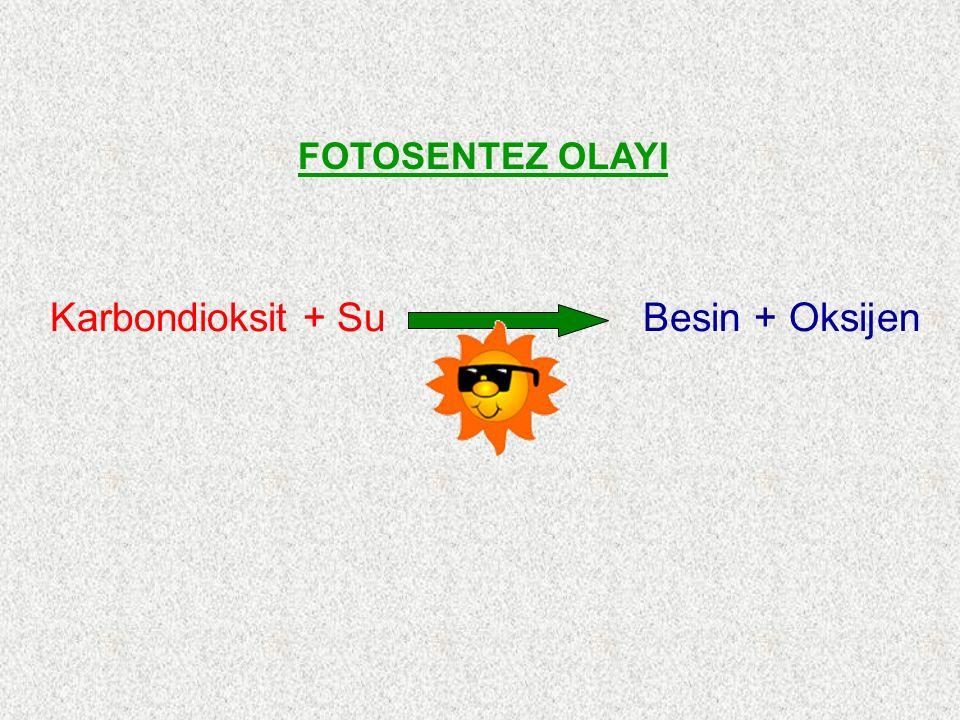 Karbondioksit + Su Besin + Oksijen FOTOSENTEZ OLAYI