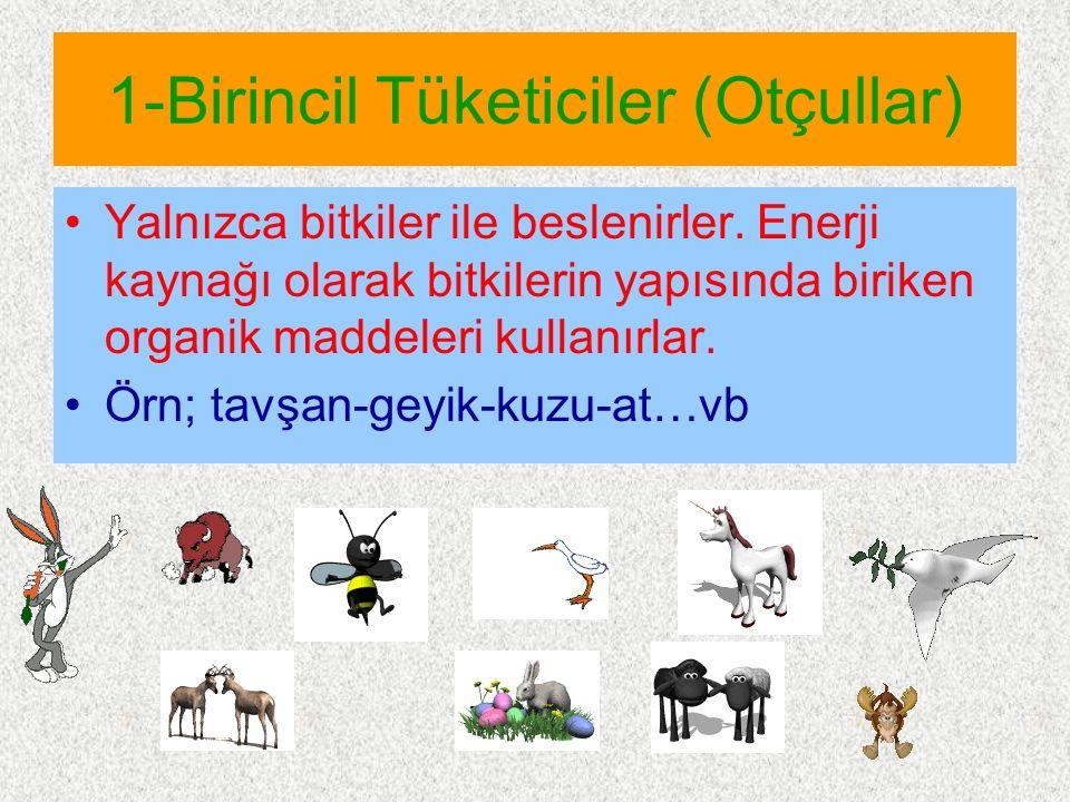 2-İkincil Tüketiciler (Etçiller) Yaşamlarını ot yiyen hayvanları yiyerek sürdüren canlılardır.