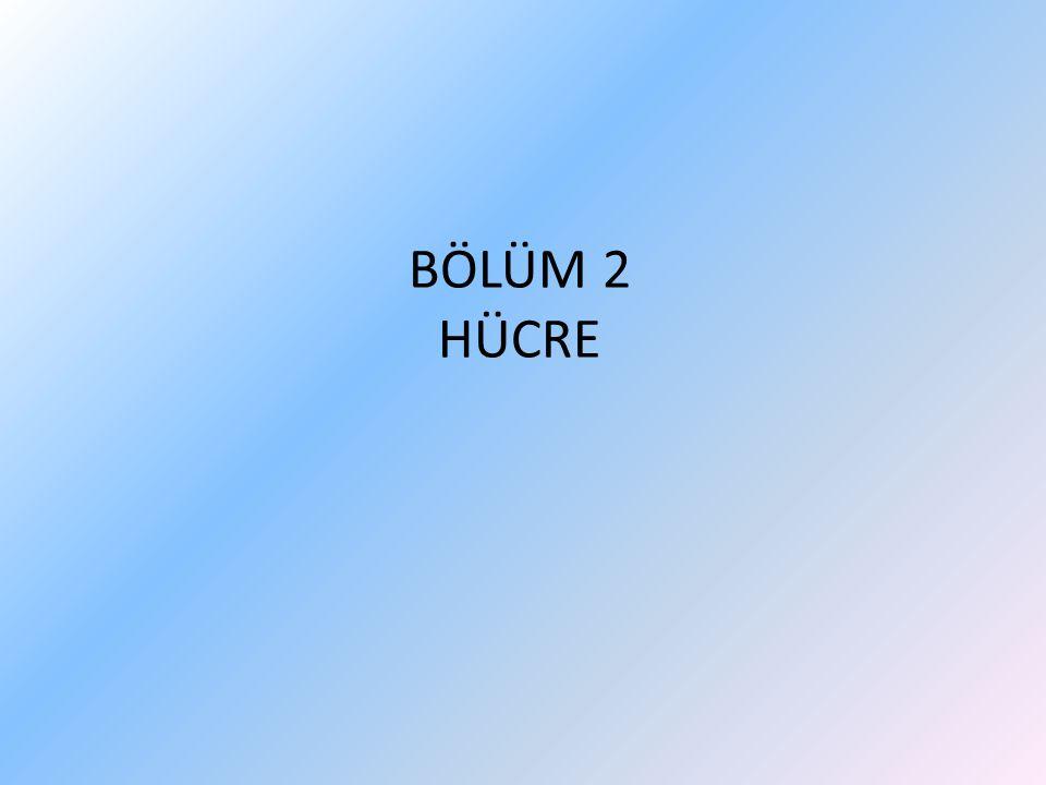 BÖLÜM 2 HÜCRE