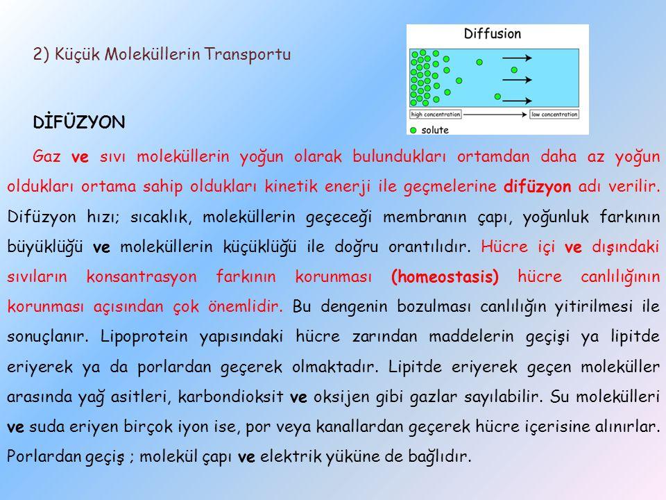 2) Küçük Moleküllerin Transportu DİFÜZYON Gaz ve sıvı moleküllerin yoğun olarak bulundukları ortamdan daha az yoğun oldukları ortama sahip oldukları k