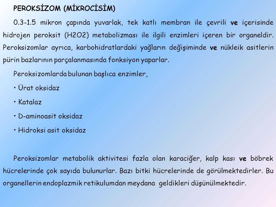 PEROKSİZOM (MİKROCİSİM) 0.3-1.5 mikron çapında yuvarlak, tek katlı membran ile çevrili ve içerisinde hidrojen peroksit (H2O2) metabolizması ile ilgili