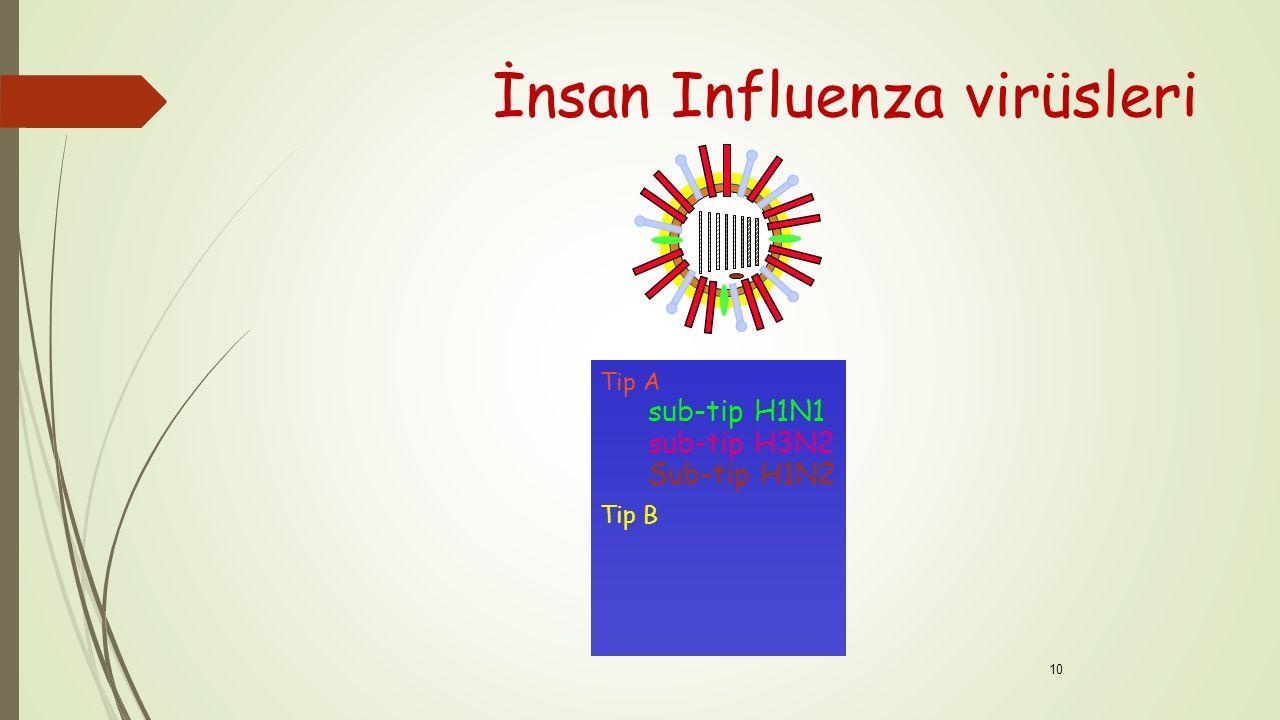 İnsan Influenza virüsleri Tip A sub-tip H1N1 sub-tip H3N2 Sub-tip H1N2 Tip B 10