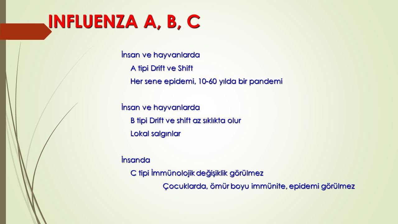 INFLUENZA A, B, C INFLUENZA A, B, C İnsan ve hayvanlarda A tipi Drift ve Shift Her sene epidemi, 10-60 yılda bir pandemi İnsan ve hayvanlarda B tipi D