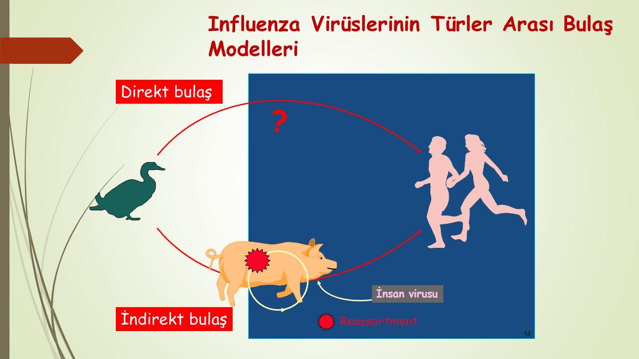 Influenza Virüslerinin Türler Arası Bulaş Modelleri Direkt bulaş İndirekt bulaş Reassortment İnsan virusu ? 14