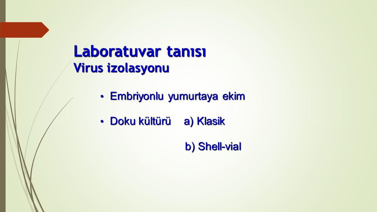 Embriyonlu yumurtaya ekim Embriyonlu yumurtaya ekim Doku kültürü a) Klasik Doku kültürü a) Klasik b) Shell-vial Laboratuvar tanısı Virus izolasyonu