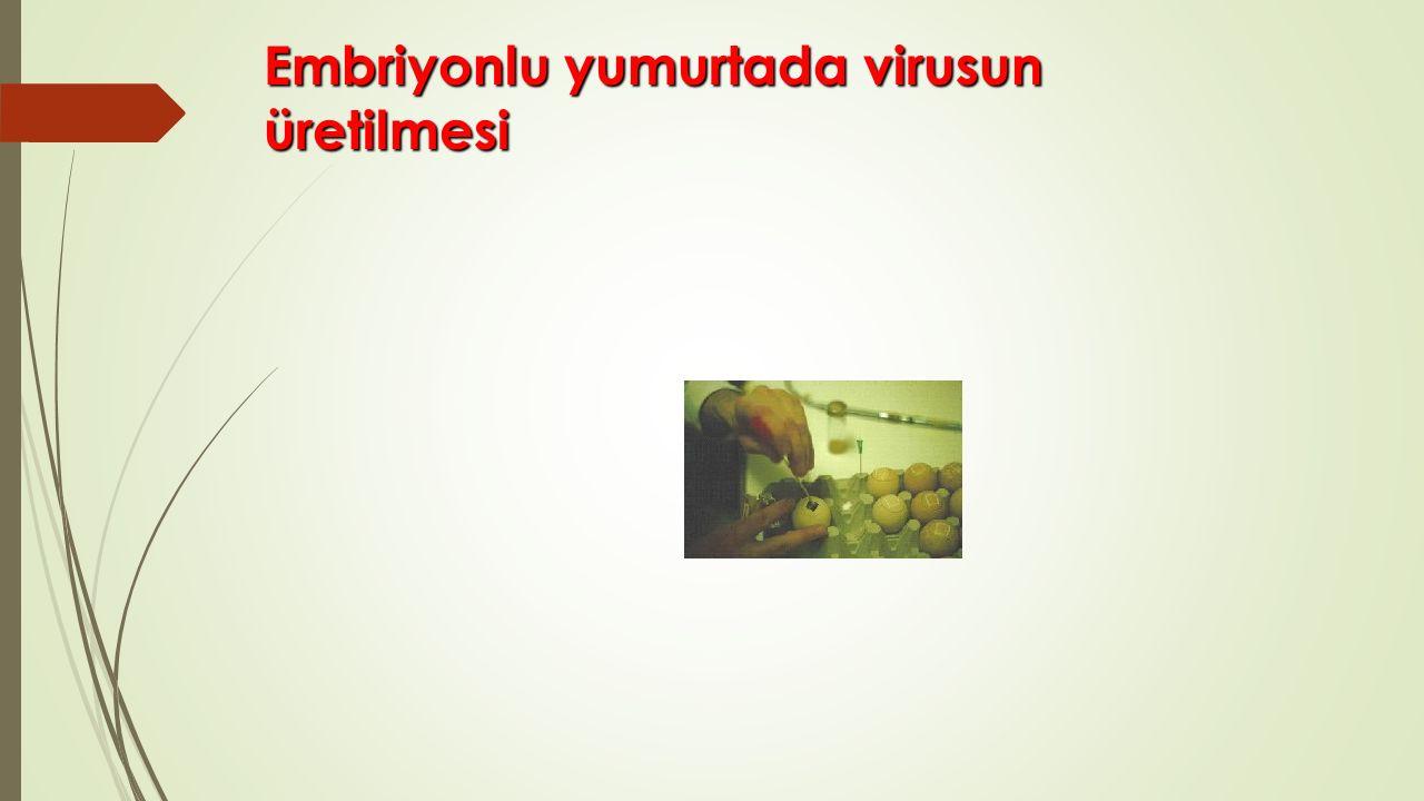 Embriyonlu yumurtada virusun üretilmesi Embriyonlu yumurtada virusun üretilmesi