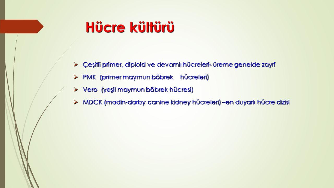 Hücre kültürü Hücre kültürü  Çeşitli primer, diploid ve devamlı hücreleri- üreme genelde zayıf  PMK (primer maymun böbrek hücreleri)  Vero (yeşil maymun böbrek hücresi)  MDCK (madin-darby canine kidney hücreleri) –en duyarlı hücre dizisi