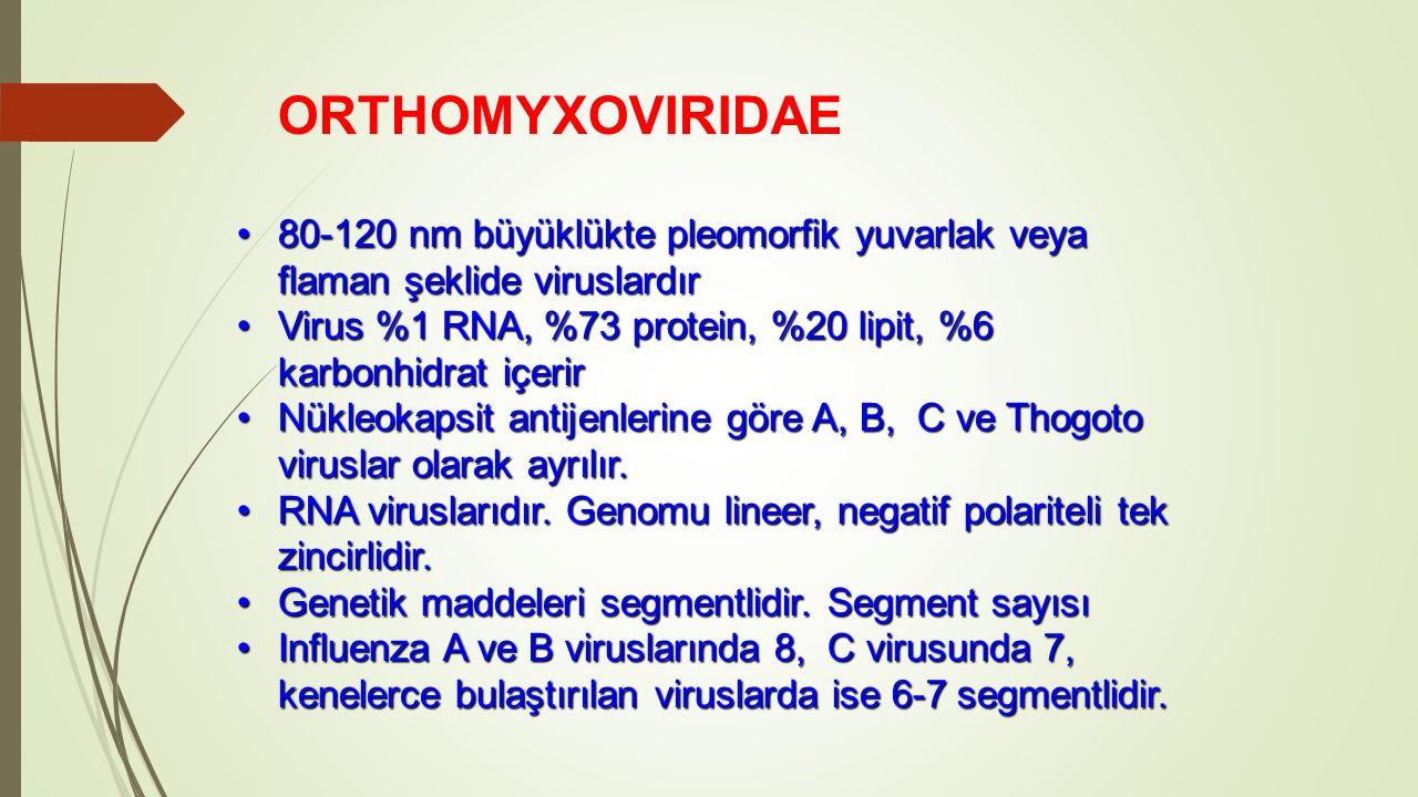 ORTHOMYXOVIRIDAE 80-120 nm büyüklükte pleomorfik yuvarlak veya flaman şeklide viruslardır80-120 nm büyüklükte pleomorfik yuvarlak veya flaman şeklide viruslardır Virus %1 RNA, %73 protein, %20 lipit, %6 karbonhidrat içerirVirus %1 RNA, %73 protein, %20 lipit, %6 karbonhidrat içerir Nükleokapsit antijenlerine göre A, B, C ve Thogoto viruslar olarak ayrılır.Nükleokapsit antijenlerine göre A, B, C ve Thogoto viruslar olarak ayrılır.