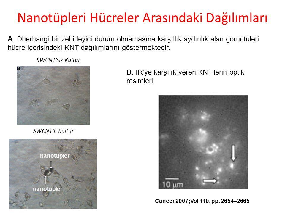 Nanotüpleri Hücreler Arasındaki Dağılımları nanotüpler A.