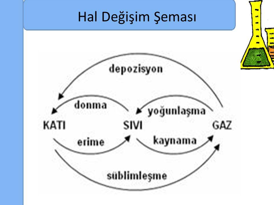 Hal Değişim Şeması