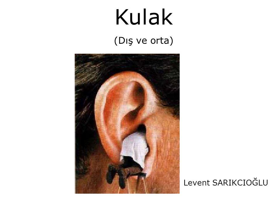 Kulak (Dış ve orta) Levent SARIKCIOĞLU
