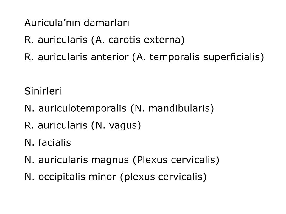 Auricula'nın damarları R. auricularis (A. carotis externa) R. auricularis anterior (A. temporalis superficialis) Sinirleri N. auriculotemporalis (N. m