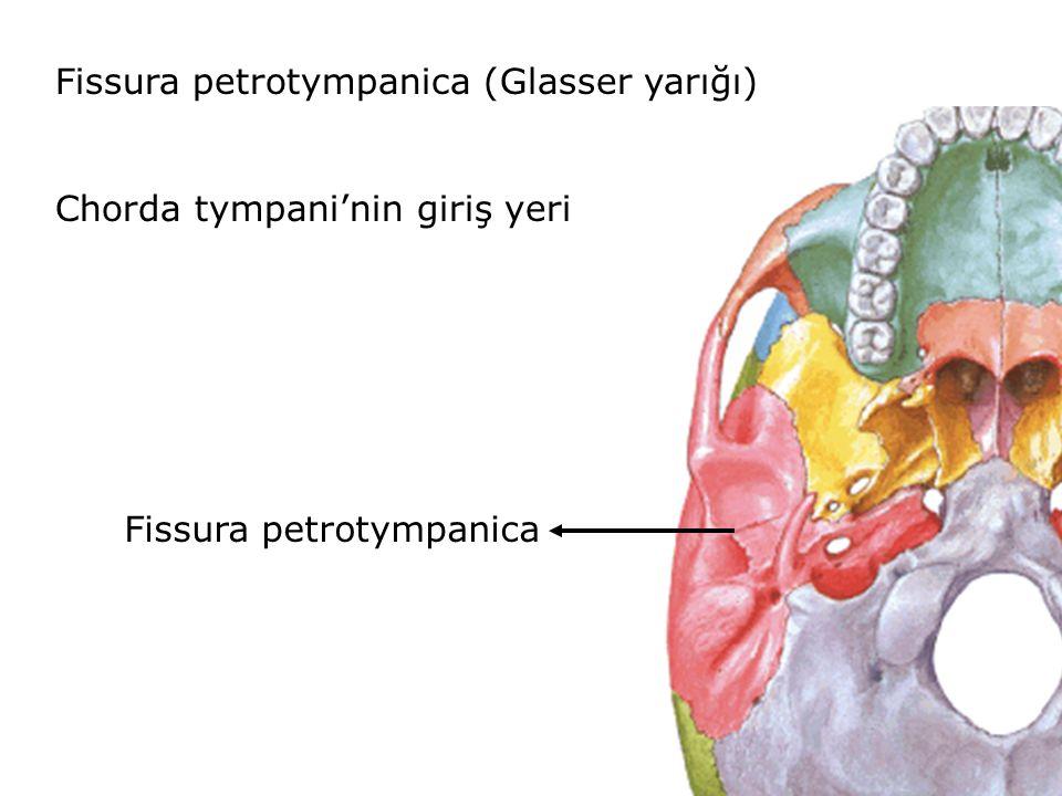 Fissura petrotympanica (Glasser yarığı) Chorda tympani'nin giriş yeri Fissura petrotympanica