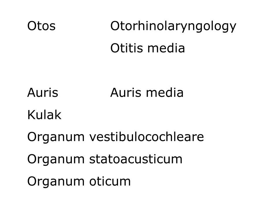 OtosOtorhinolaryngology Otitis media AurisAuris media Kulak Organum vestibulocochleare Organum statoacusticum Organum oticum