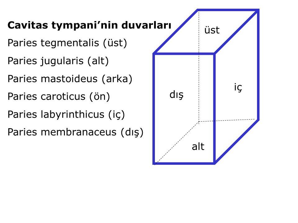 Cavitas tympani'nin duvarları Paries tegmentalis (üst) Paries jugularis (alt) Paries mastoideus (arka) Paries caroticus (ön) Paries labyrinthicus (iç) Paries membranaceus (dış) üst alt iç dış