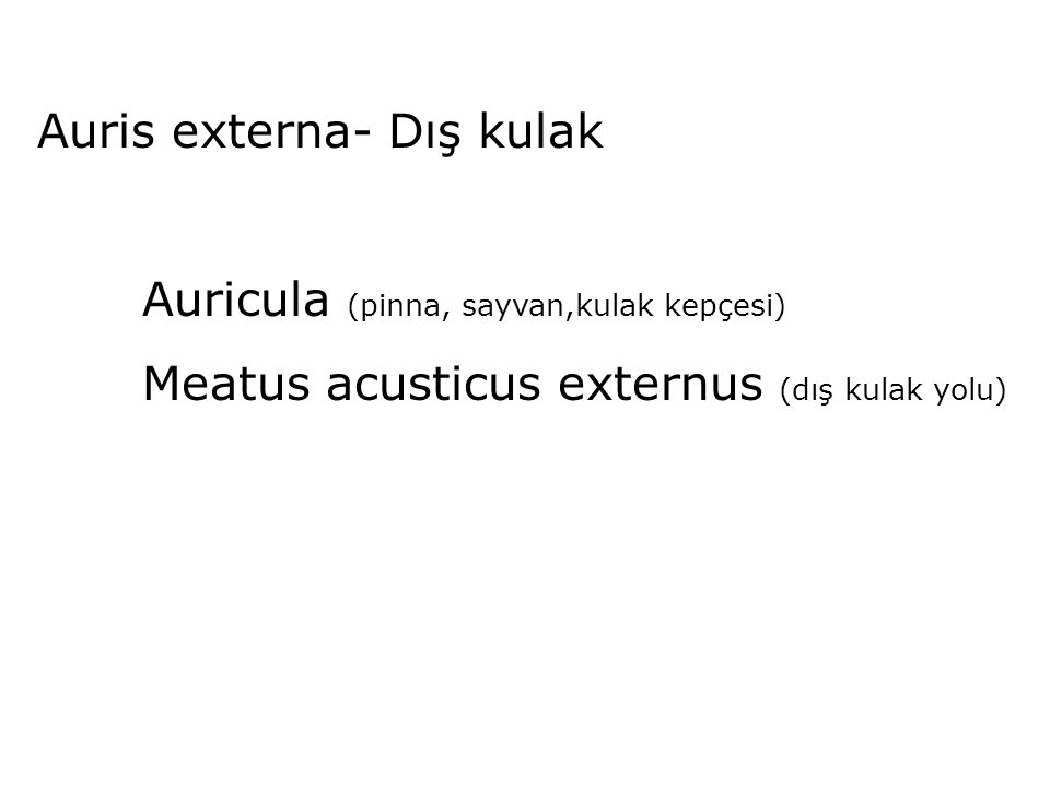 Auris externa- Dış kulak Auricula (pinna, sayvan,kulak kepçesi) Meatus acusticus externus (dış kulak yolu)