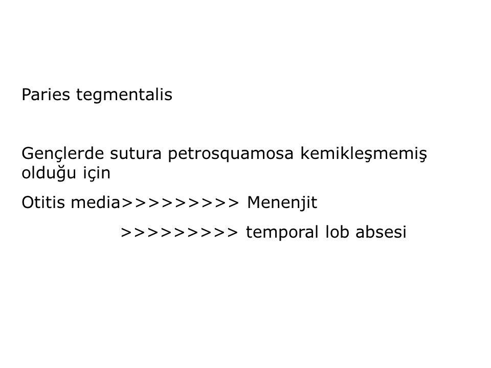 Paries tegmentalis Gençlerde sutura petrosquamosa kemikleşmemiş olduğu için Otitis media>>>>>>>>> Menenjit >>>>>>>>> temporal lob absesi